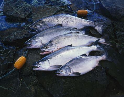 top  types  salmon
