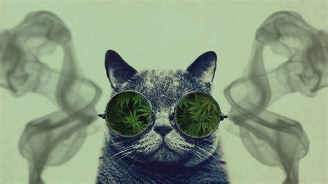 cat  sunglasses wallpapers top  cat
