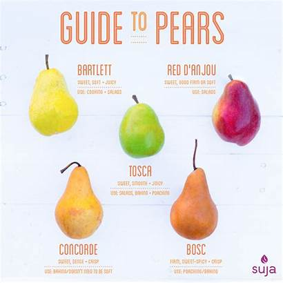 Pears Guide Types Different Pear Varieties Juice