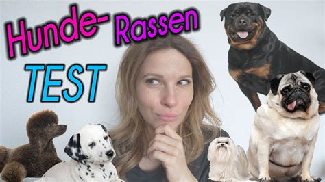Welcher Hund Passt Zu Mir ♡ Live Test ♡ Karolovesmilka