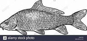 Food Line Drawing Fish Stock Photos & Food Line Drawing ...