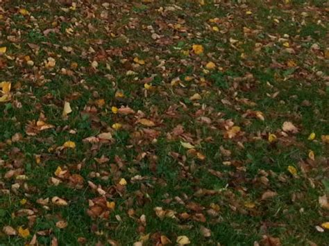 Rasen Mähen Vor Winter by Letzter Rasenschnitt Im Herbst Letzter Rasenschnitt Vor