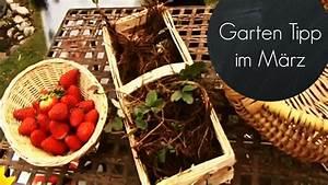 Garten Im März : garten f r den fr hling fit machen erdbeeren im m rz ~ Lizthompson.info Haus und Dekorationen