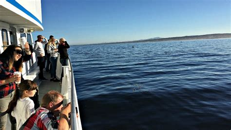 Fast Boat Whale Watching Monterey by A Solo Retreat To Monterey Bay