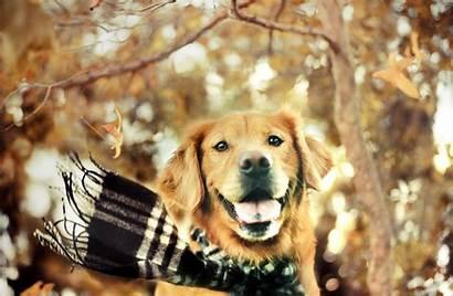 Golden Retriever Wallpapers Dog