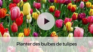 Planter Des Bulbes : tulipe botanique clusiana lady jane bulbe vari t ~ Dallasstarsshop.com Idées de Décoration