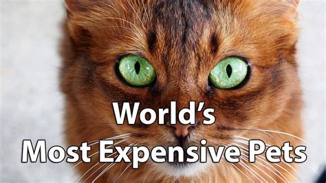 expensive pets   world  racing horses cost