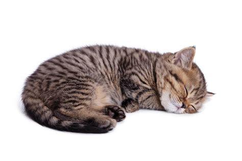 esp 233 rance de vie du chat calcul de l 226 ge du chat
