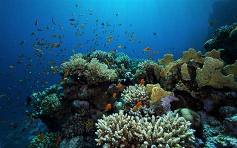 coral mauritius maldives