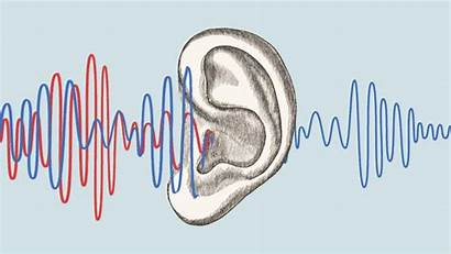 Listening Ears Election Knees Deeper Social Cycle