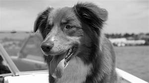 Black And White Dog Wallpapers (45 Wallpapers) – Adorable ...