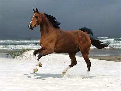Horses Colors Horse Sea Shore Around Stallion