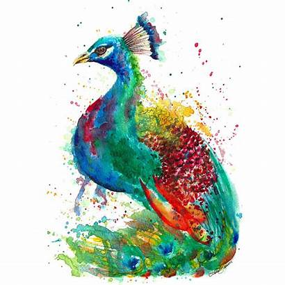 Peacock Illustration Painting Prints Posters Notonthehighstreet Portraits