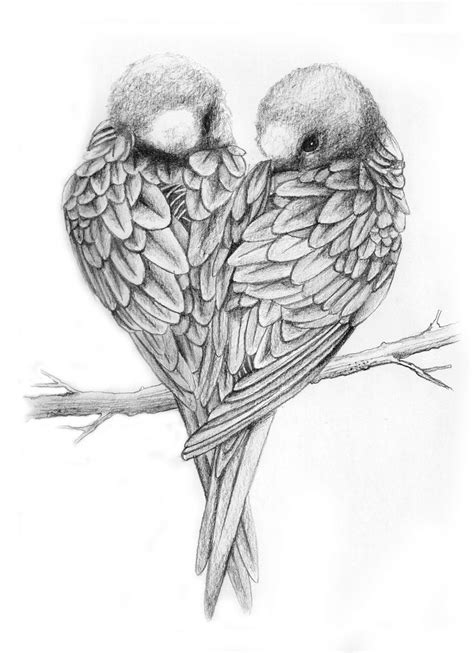 Drawings of Love Birds | Love Birds Drawing Love birds ♥ | Things to Draw | Pinterest | Bird