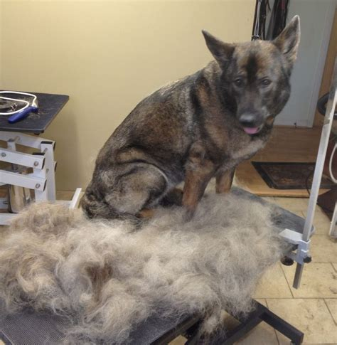 excessive hair shedding in cats 25 best ideas about hair removal on