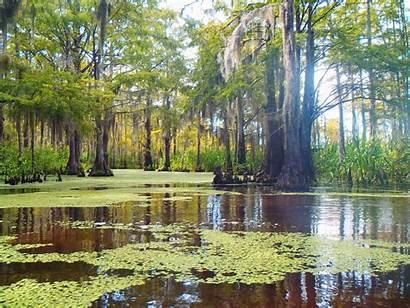 Swamp Orleans Louisiana Tour Wetlands Different