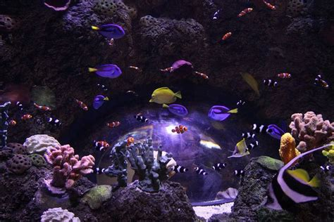 legoland california sea aquarium sea aquarium pintere
