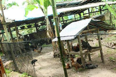 davao partoza durian farms