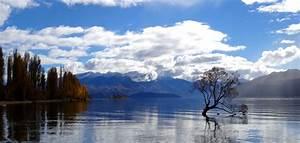 Baum Am Wasser : freiwilligenarbeit neuseeland 2019 ~ A.2002-acura-tl-radio.info Haus und Dekorationen