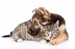Why Bow Wow Meow Pet Insurance? - Bow Wow Meow Pet Insurance