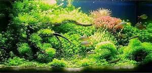 Aquarium 120l Mit Unterschrank : pflanzen wachsen langsam aquarium forum ~ Frokenaadalensverden.com Haus und Dekorationen