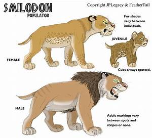 Image - Smilodon.jpeg | JPL Live the Legend Wiki | FANDOM ...