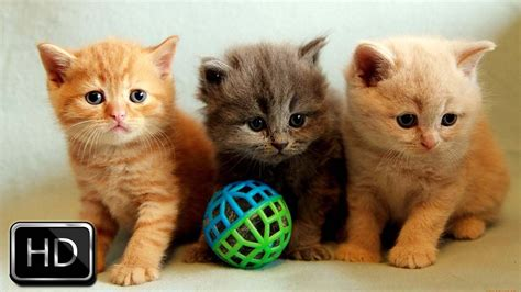 adorable kittens playing   cute youtube