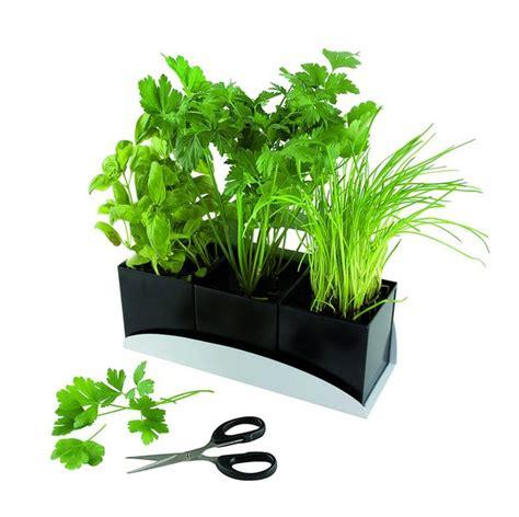 comment cultiver des plantes aromatiques dans int 233 rieur galerie photos d article 2 5