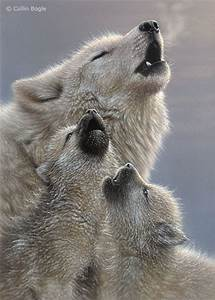 Wolf pictures | Cute animal pictures and videos blog