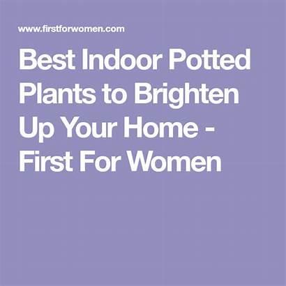Plants Potted Firstforwomen Brighten Care Easy