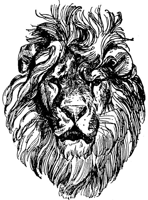 Lion Head | ClipArt ETC