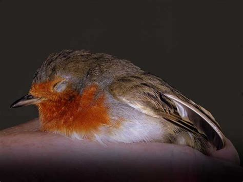 what to do if you find an injured bird thisnzlife