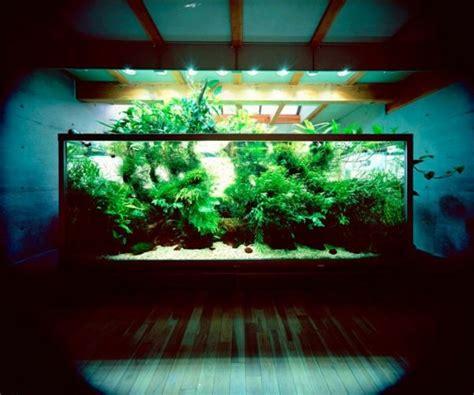 Aquarium Kinderzimmer Ideen by Die Besten 25 Aquarium Einrichten Ideen Auf