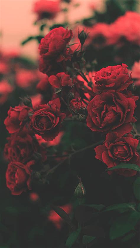 Aesthetic Iphone X Wallpaper Floral by 29 Roses Iphone X Wallpapers Phone Fondos De