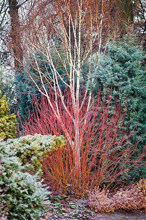 winter garden ideas  pinterest winter