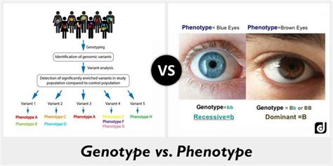 Difference Between Genotype And Phenotype