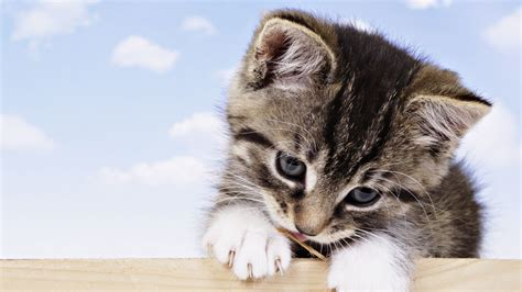 cat baby wallpaper wallpapers 765544 imgstocks