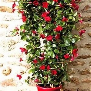 Plantes Grimpantes Pot Pour Terrasse : conseils pour planter des fleurs grimpantes jardinerie ~ Premium-room.com Idées de Décoration