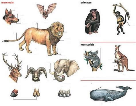 Animals And Their Names And Parts Exercise
