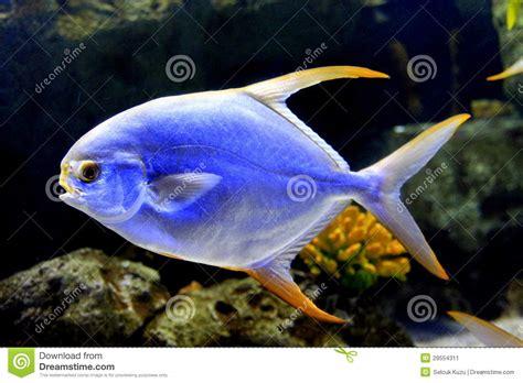 poisson aquarium eau de mer poissons d eau de mer dans l aquarium image stock image 29554311