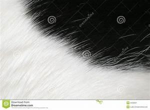 Planisphère Noir Et Blanc : fond noir et blanc de fourrure image stock image du chat vache 4432901 ~ Melissatoandfro.com Idées de Décoration