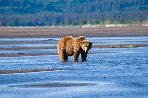 10 Best Destinations for a Bear Safari (with Photos & Map ...