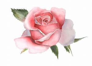 Dessin Fait Main : rose de rose d 39 aquarelle sur le dessin fait main blanc illustration stock illustration du ~ Dallasstarsshop.com Idées de Décoration