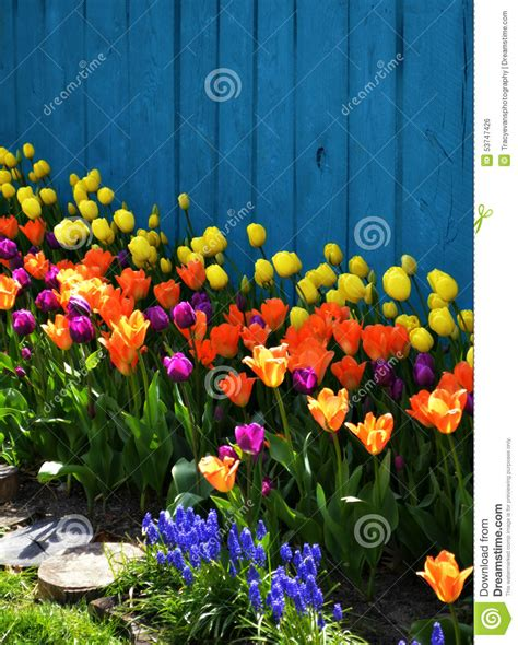 colorful spring landscaping  tulips stock photo