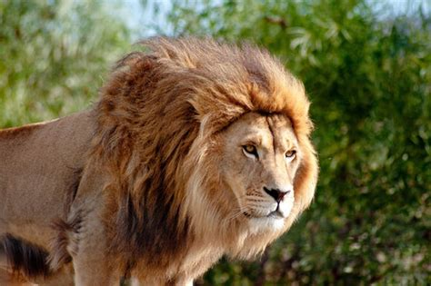orphan mauled  death  lions  park worker led