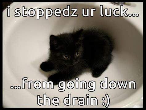 Good Luck Cat Meme - funny cats archives the casino images netthe casino images net