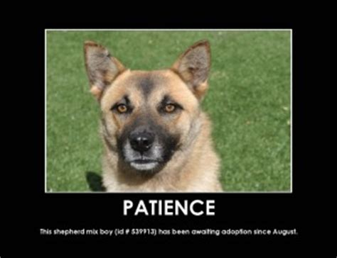 animal patience quotes quotesgram