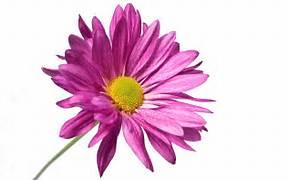 flower-white-backgroun...