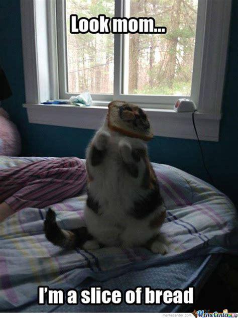 Cat In Bread Meme - bread cat by jjpaker meme center