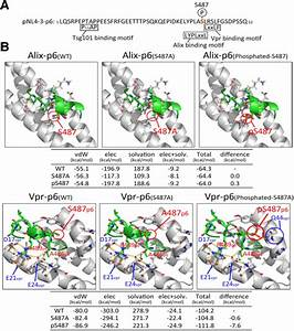 The Phosphorylation Of Gag At Ser487 Facilitates The